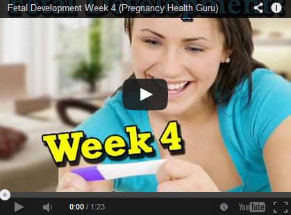Developing Baby: Week 4